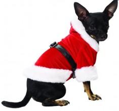Kerstpakje hond